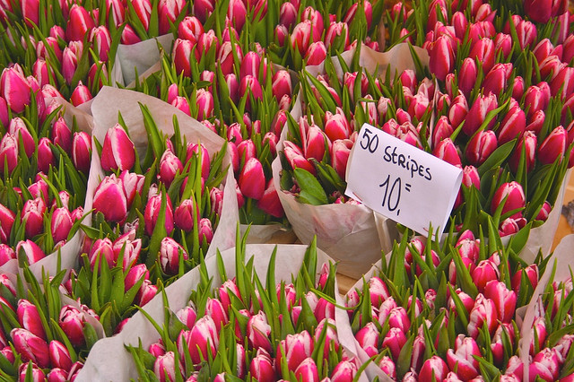 Flowers-at-Bloom-in-the-Amsterdam-Tulip-Market-by-ethanlindsey