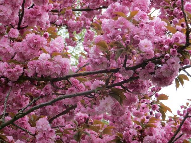 Spring hus sprung in our neighborhood!
