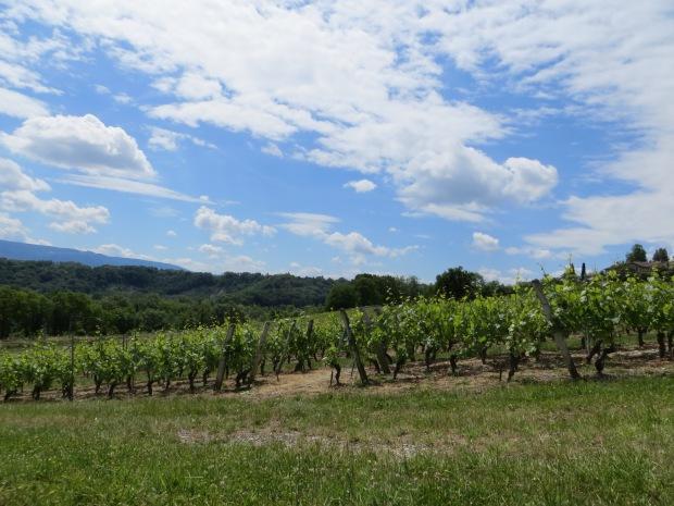 We spent Saturday celebrating the opening of the Swiss wine season.